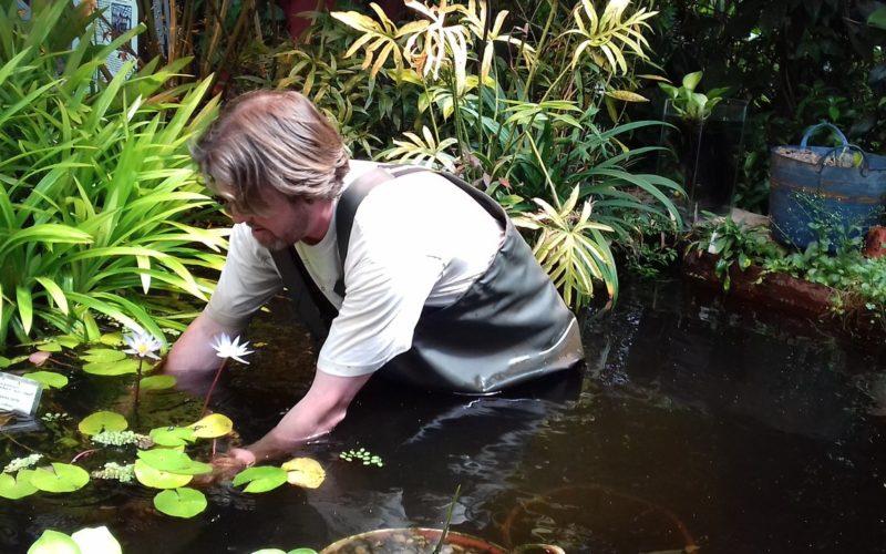 Знаменитая кувшинка Виктория Амазонская будет расти в иркутском ботаническом саду