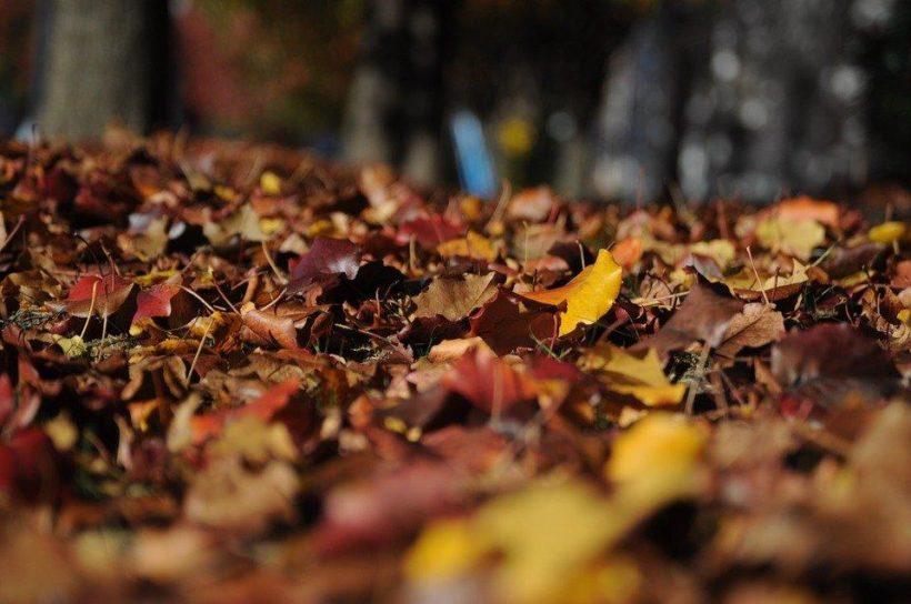 Выходные с IrkToday: здравствуй, осень!