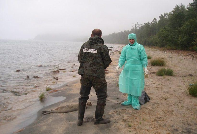 На Байкале вновь обнаружили мертвых нерп