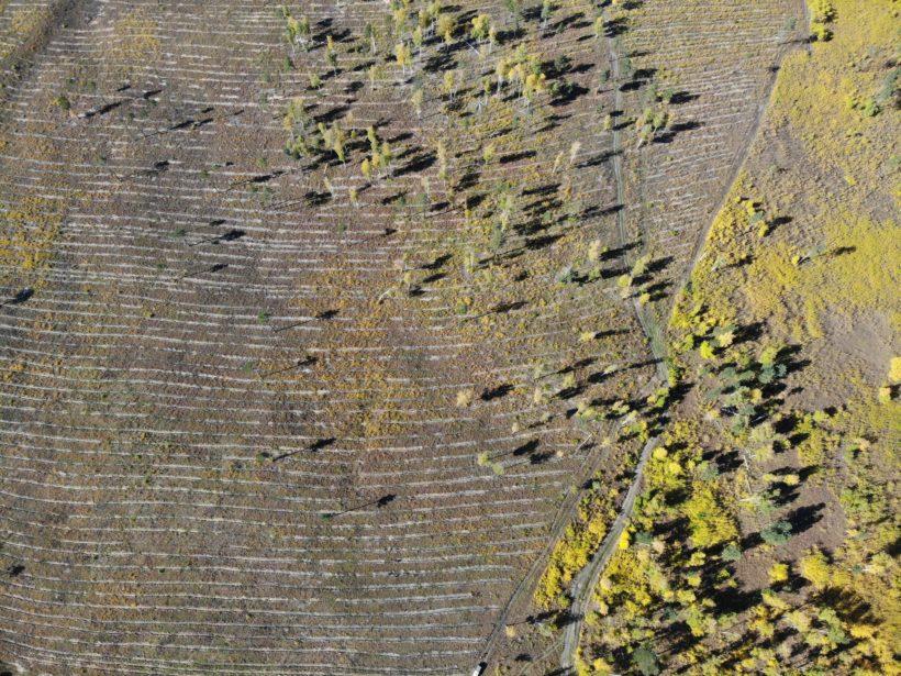 В Иркутском районе волонтеры высадили более 9 тысяч саженцев сосны и лиственницы