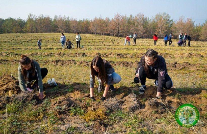 На Ольхоне высадят 32 тысячи деревьев