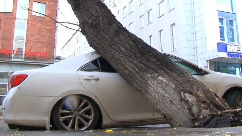 Тополь рухнул на припаркованное авто в центре Иркутска
