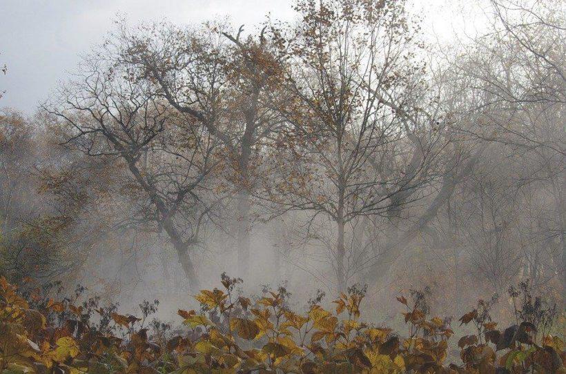 О погоде в Иркутской области: дождь, ветер, местами мокрый снег