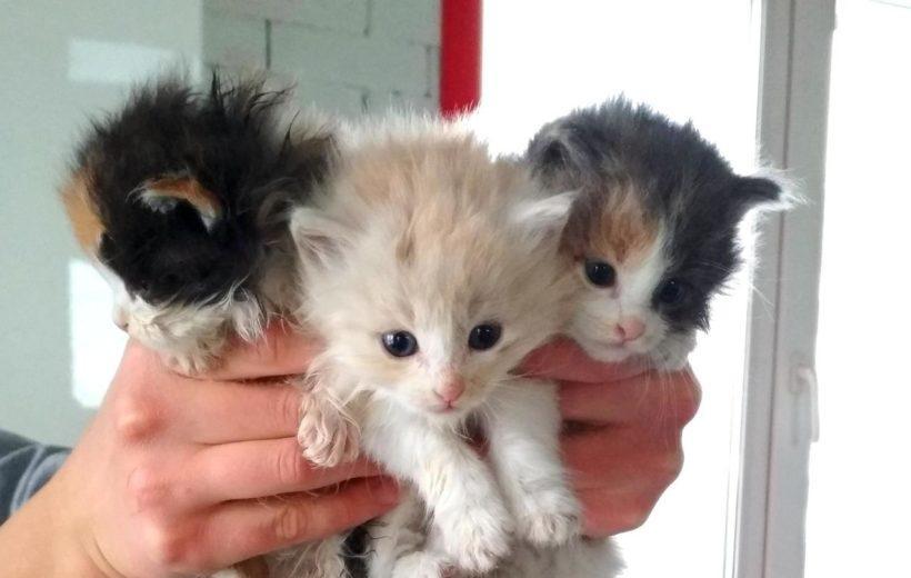 В Шелехове неизвестные заколотили подвал с котятами. Сейчас животные спасены, им ищут дом