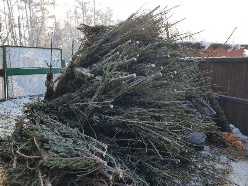 Иркутский зоосад объявил сбор елок