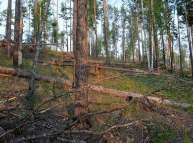 Итоги работы минлеса Иркутской области: три уголовных дела и миллиард рублей ущерба