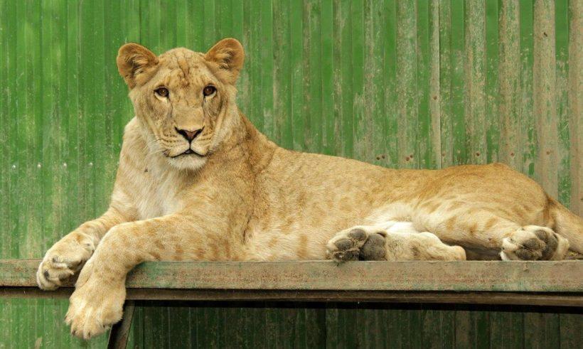 Иркутская зоогалерея работает до конца марта, а потом закрывается для переезда