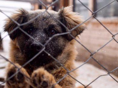 Из горевшего приюта для животных в Иркутске просят забрать щенков