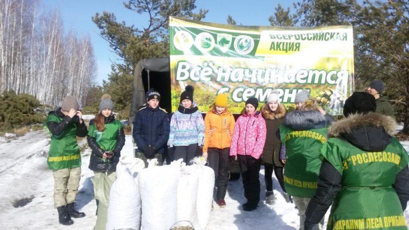 спрос на семена сосны в иркутской