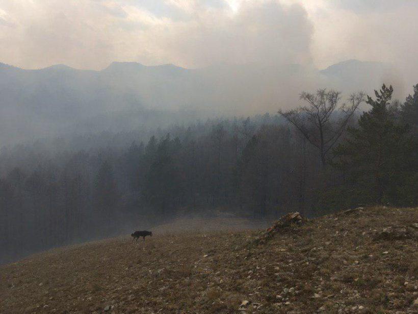 Большое Голоустное в дыму. Фото и видео с места