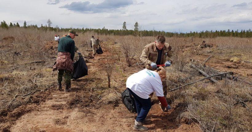 В Братском лесничестве 17 мая высадят деревья