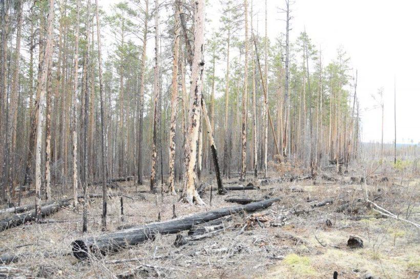В правительстве Иркутской области сообщили, что обеспокоены задержанием министра лесного комплекса