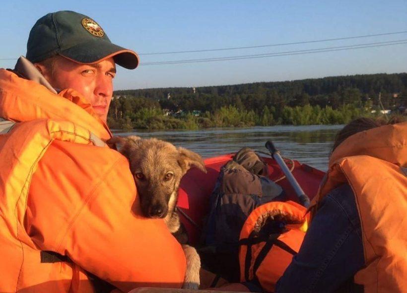 Сотрудники МЧС и питомника К-9 спасают собак из затопленного Тулуна. Видео и фото