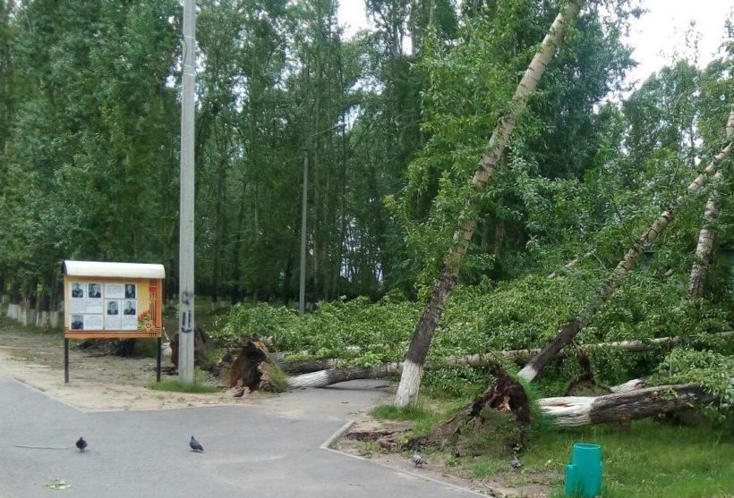 В Зиме из-за сильного ветра повалило деревья