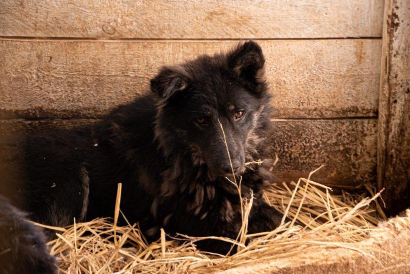 Кадры спасения животных в Тулуне. И фото вывезенных из зоны бедствия собак уже в Иркутске