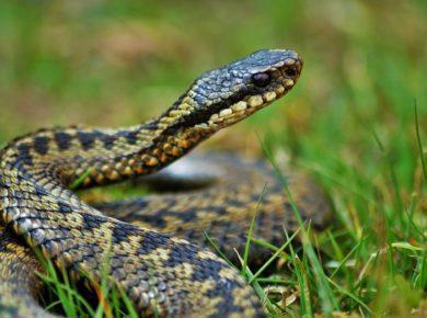 Люди жалуются на нашествие змей после наводнения