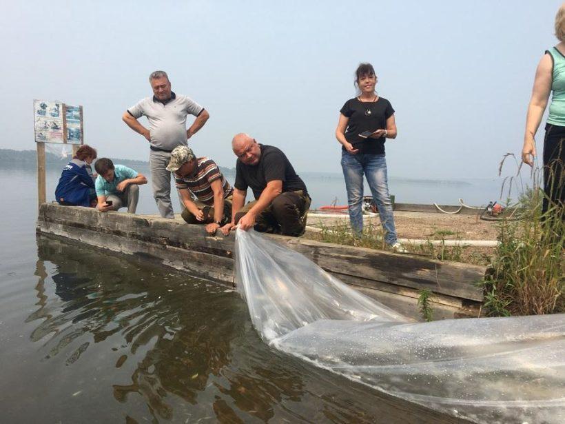 Коршуновский ГОК выпустил полмиллиона мальков пеляди в Усть-Илимское водохранилище