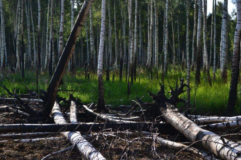 Спикер ЗС о пожарах: Правительство Иркутской области вместо тушения переводит леса в категории, по которым не надо принимать меры