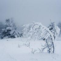 В западных и северных районах Иркутской области ожидается усиление ветра