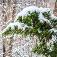 11 февраля в некоторых районах Иркутской области ожидаются мокрый снег и метели
