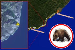 Туристов предупреждают о медведе, находящемся в районе Большой Байкальской тропы