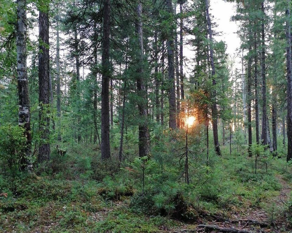 В Туколони начали лесовосстановление