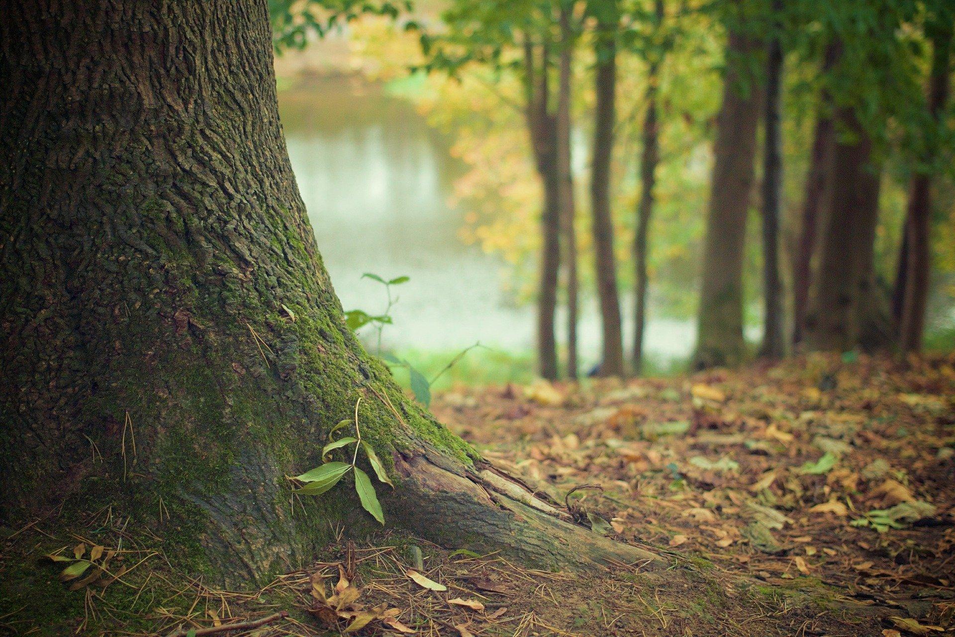 ЗС приняло постановление о создании зеленого пояса вокруг Братска
