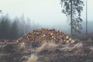 Контрабанду леса более чем на два миллиона рублей обнаружили в Тайшетском районе