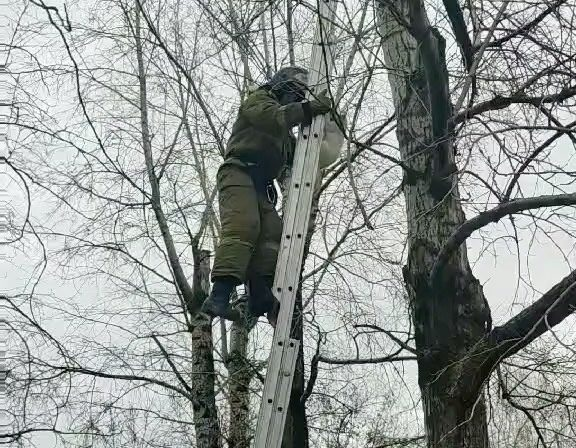 Пожарные спасли кошку с дерева в Усолье