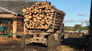 """""""Черные лесорубы"""" предстанут перед судом за нелегальную заготовку леса в Чунском районе"""