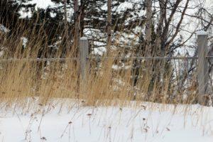 Ветер и мокрый снег ожидаются в Приангарье 30 марта