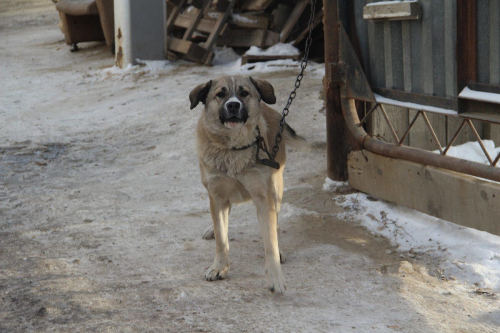 Двое мужчин расстреляли собаку и протащили её за машиной под Усть-Илимском