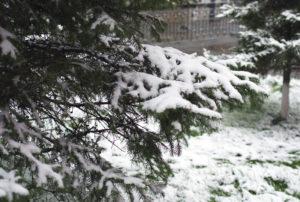 Ветер, дождь и мокрый снег ожидаются в Иркутской области 13 апреля