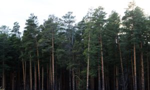 Мэр Иркутска Руслан Болотов поручил увеличить площадь городских лесов