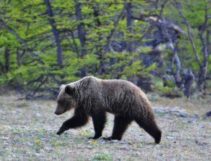 На КБЖД временно запретили устанавливать палатки из-за медведей