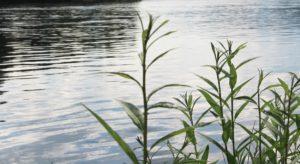 17-летний подросток утонул в Иркутске