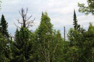 С начала сезона 9105 жителей Иркутской области пострадали от укусов клещей