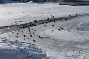 Реки в Приангарье начали покрываться льдом