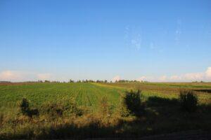 Около 2 тысяч гектаров конопли уничтожили в Иркутской области с мая 2021 года